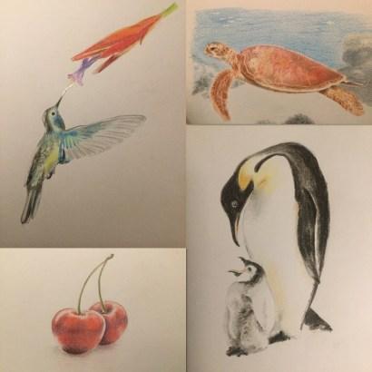 tekening kleurpotlood kolibri pinguin zeeschildpad