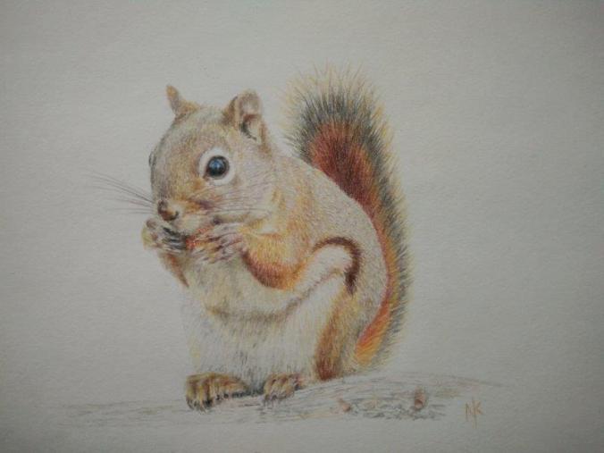 squirrel in colour pencil
