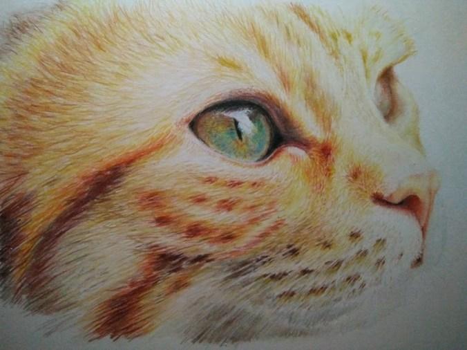 kat kleurpotlood tekening