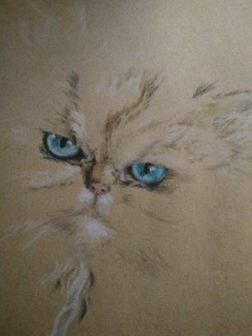 Fluffy cat 2
