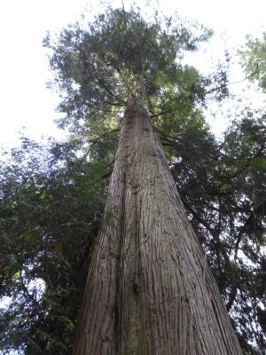 hoge boom