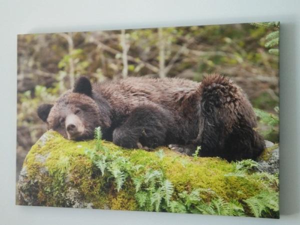 Foto van luierende beer