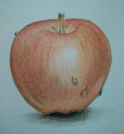 appel in kleurpotlood