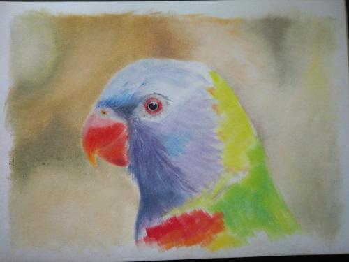 papegaai pastel ondergrond
