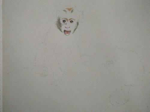 tekening Baby berberaap