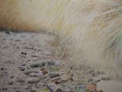 tekening leeuw grond