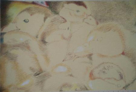 tekening eendjes kleurpotlood