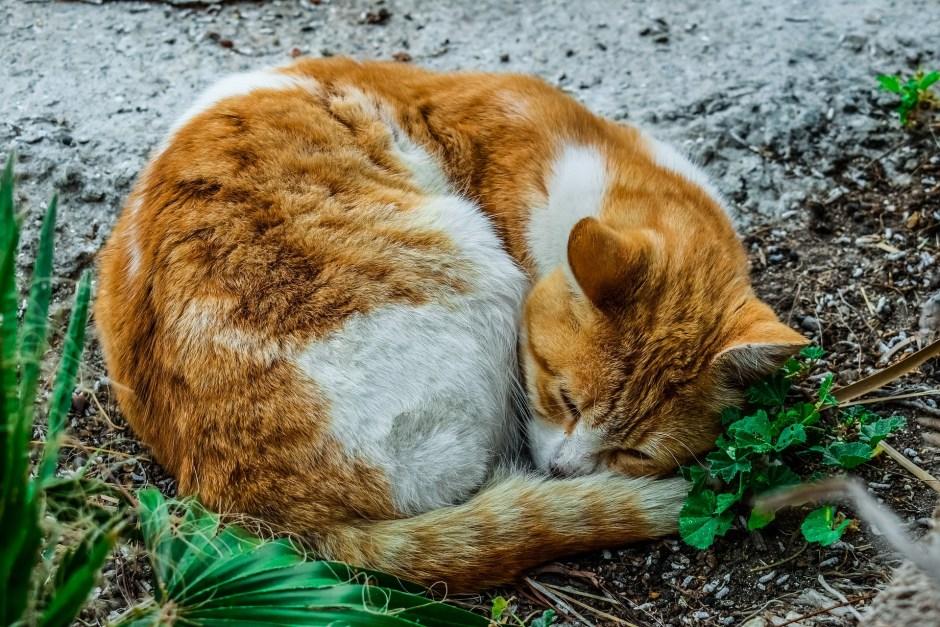 cat-3254571_1920