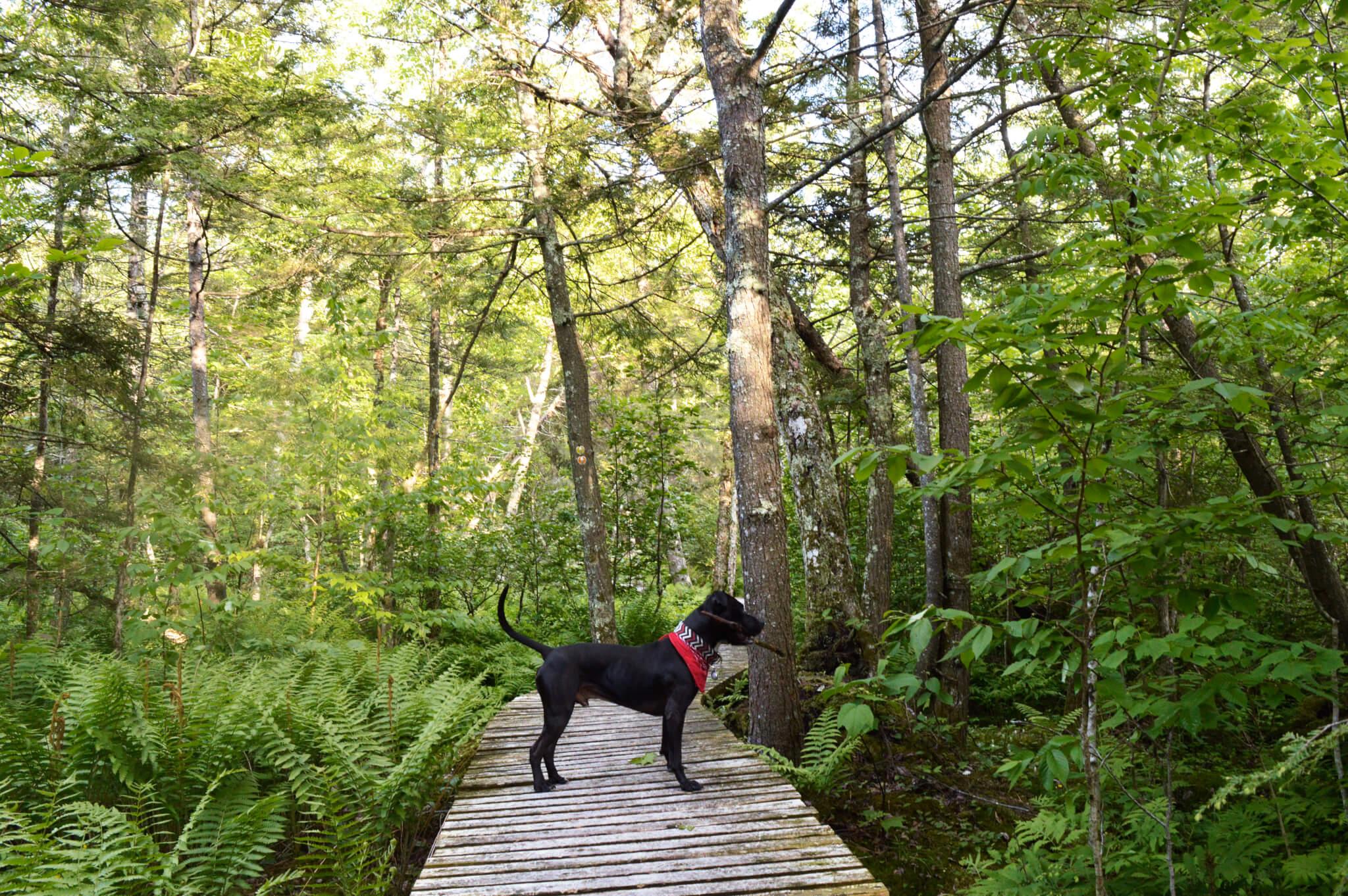 Photo Au Diable Vert pour notre article Top 7 – Randos à faire avec son chien (Partie 2)