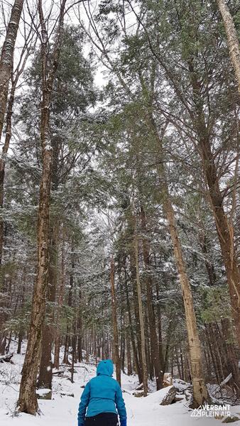 Versant_Plein-Air_Mont-Gale_hiver_LR_01
