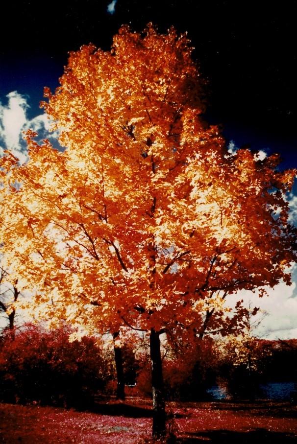 Oak-Tree__Hambone-Lake__Kodak-Ektacolor-IE-135-20a.jpg