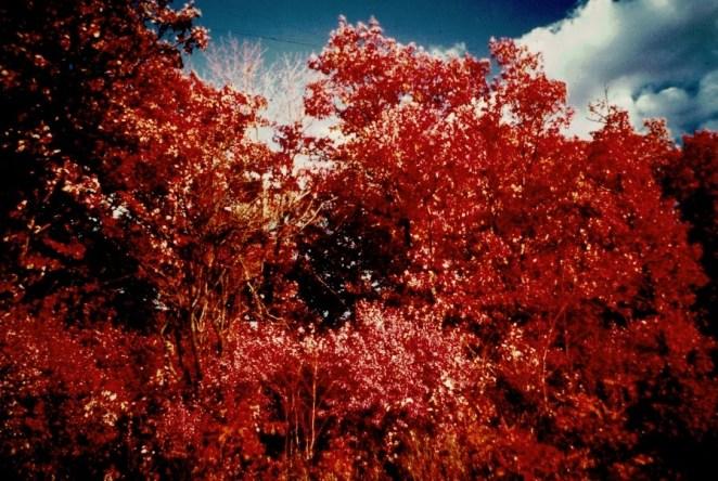 Tinley-Creek-7__Kodak-Ektacolor-IE-135-20