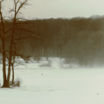 Photo of the Day: Blizzard in Forest Preserve