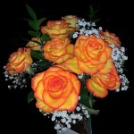 Featured Photo: Flower of the Day – French Romantic Rose
