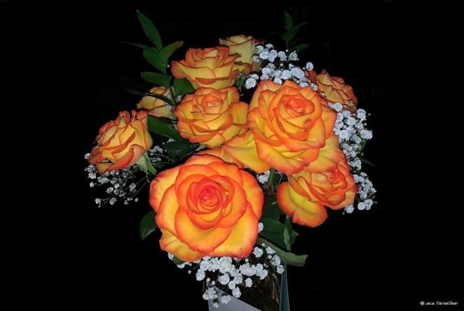 Flower_French Romantic Rose.jpg