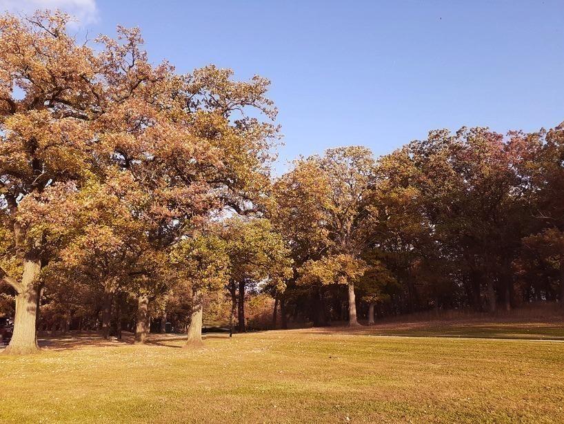 Yankee Woods Grove 2.jpg