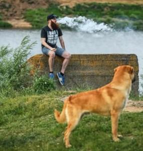 Vaping Around Pets 1
