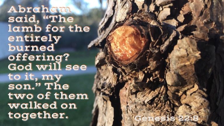 Verse Image for Genesis 22:8 - 16x9