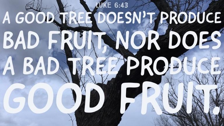 Verse Image for Luke 6:43 - 16x9