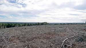 Clear cut in lands designated for the Raven Head Protected Area, 2011