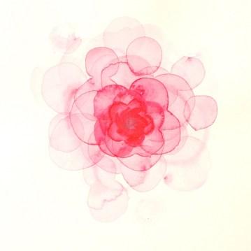 3 Version DADA illustration rose