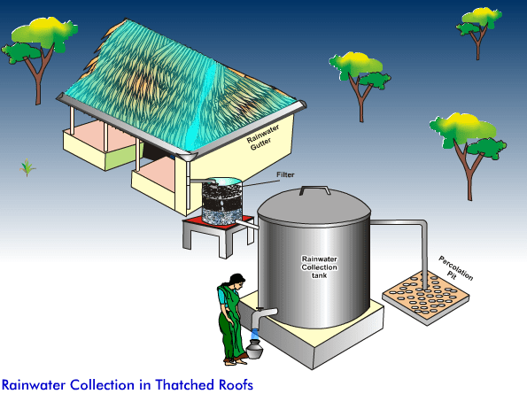 Rain Collection in Thatched Roofs