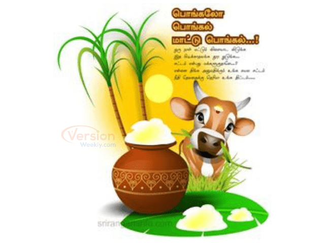 Thai Pongal Wishes Images in Tamil