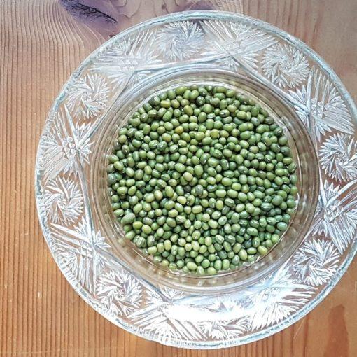 Haricot mungo, graines à faire germer