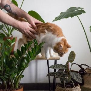 jungle plante interieur