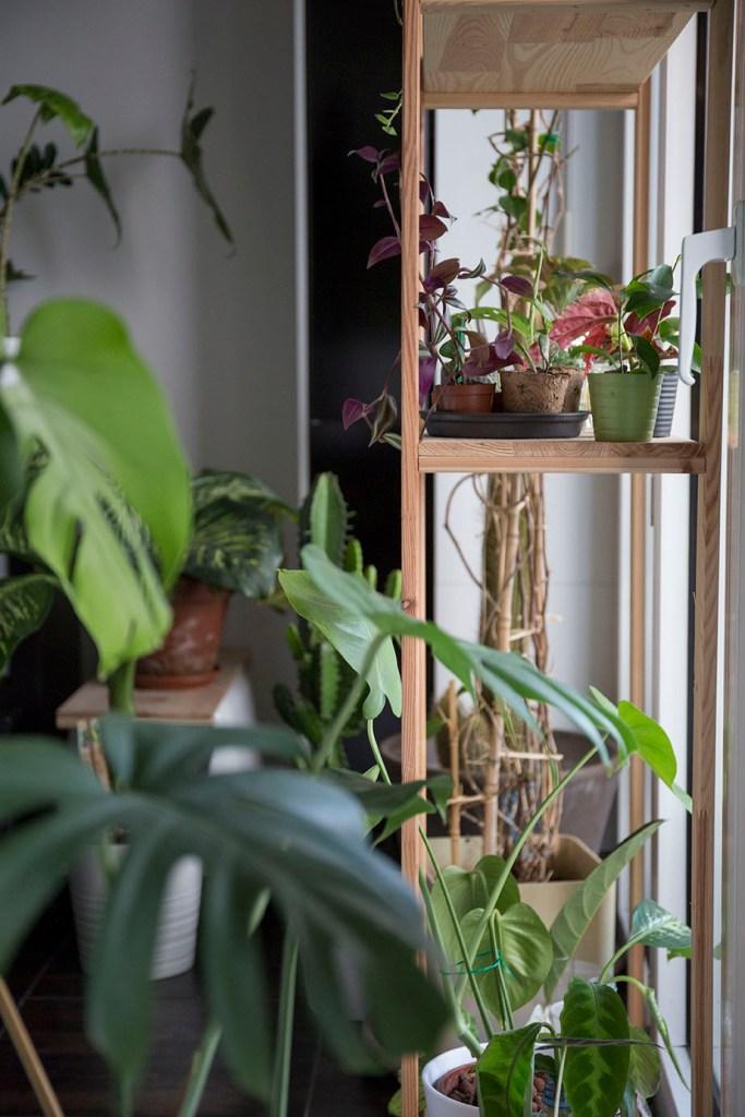 plante hiver entretien