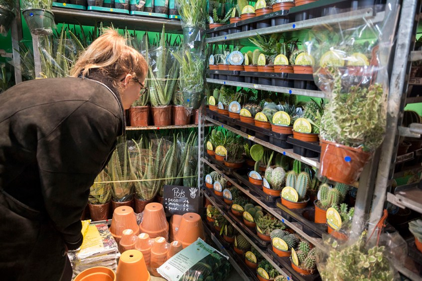 evenement plantes pour tous