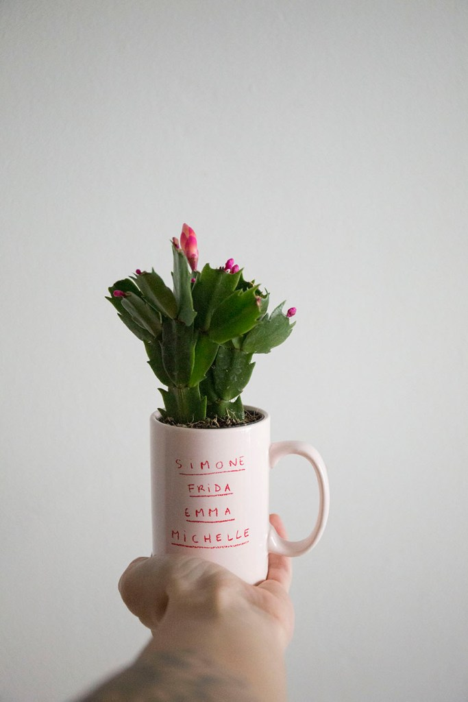 cactus fleurs schlumbergera
