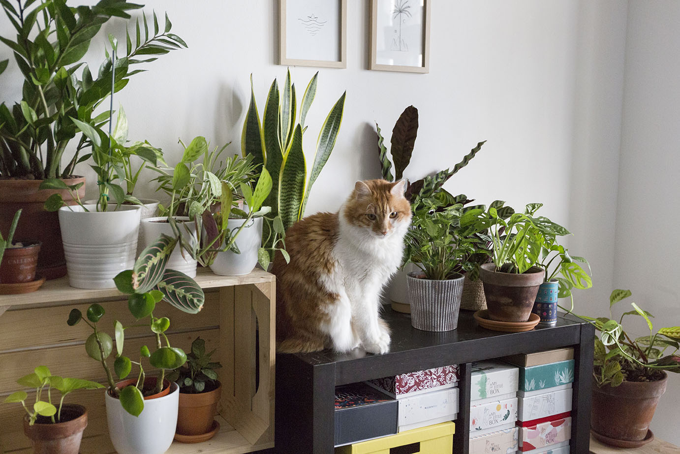 chat plantes interieur