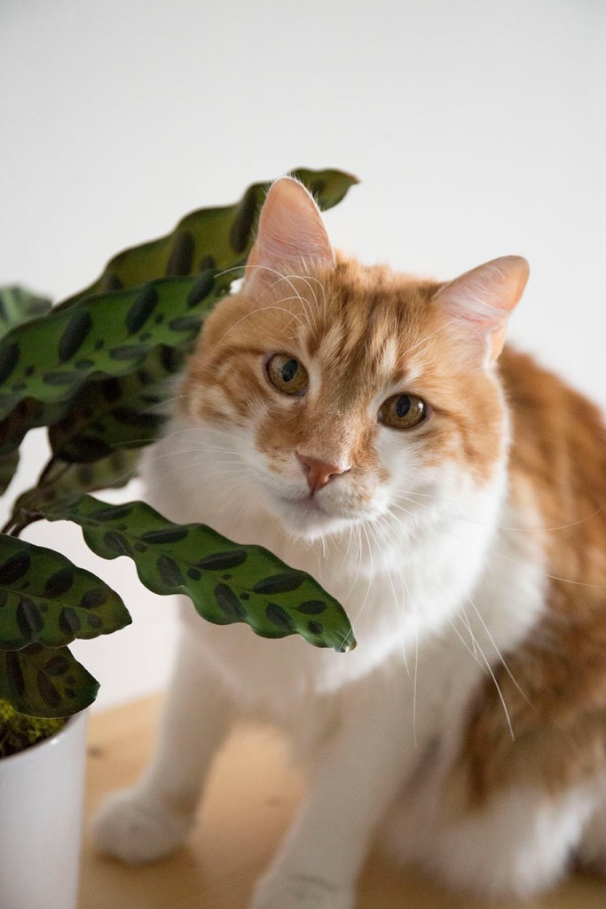 plantes chat