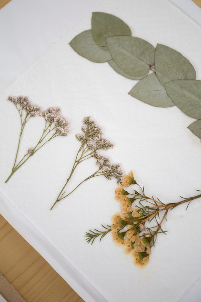 specimen presse fleur herbier