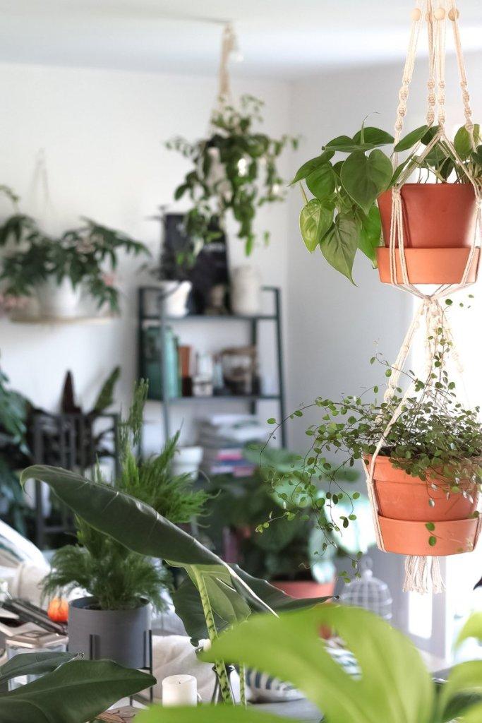 cordes suspension au fil plantes studio