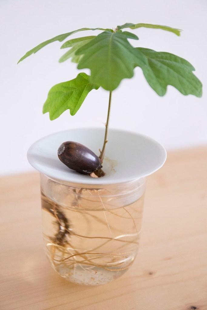germination sprout graines