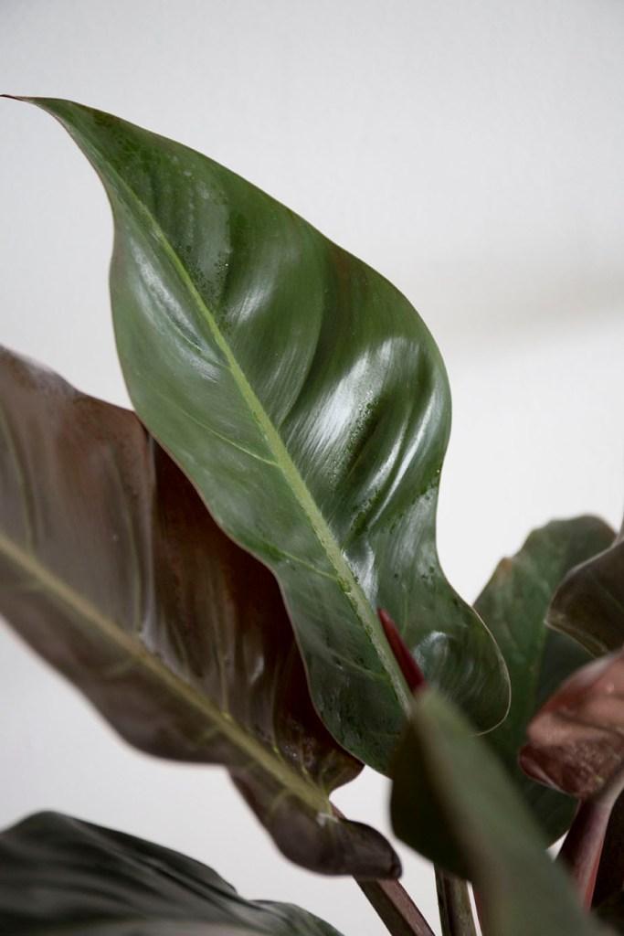 plantes interieur verte