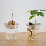 sprout hydoculture graines