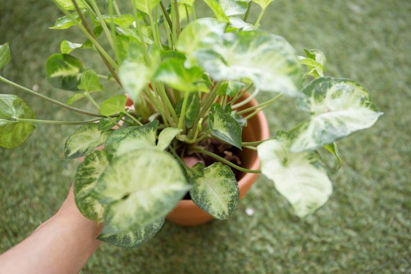 plante rempotage interieur