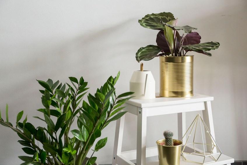 selection arrosoir plante