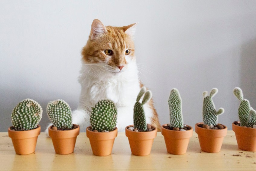 cactus plante boutures
