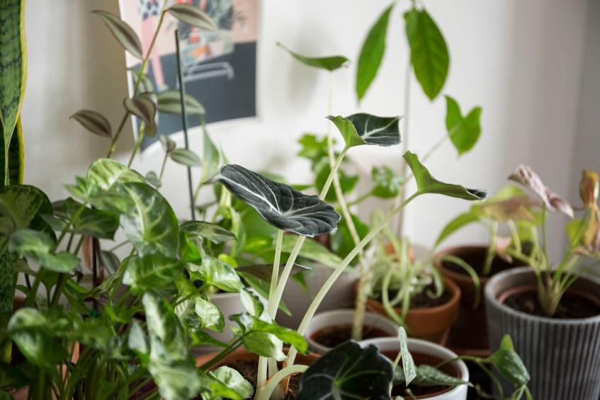 engrais plante interieur