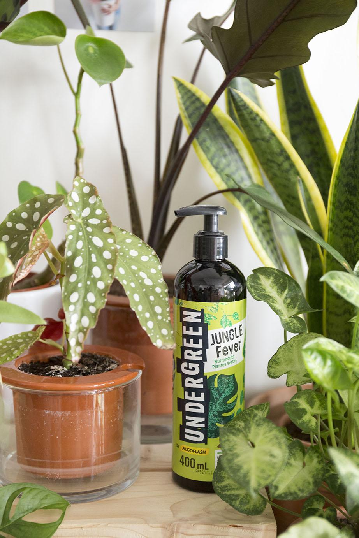 interieur plante engrais