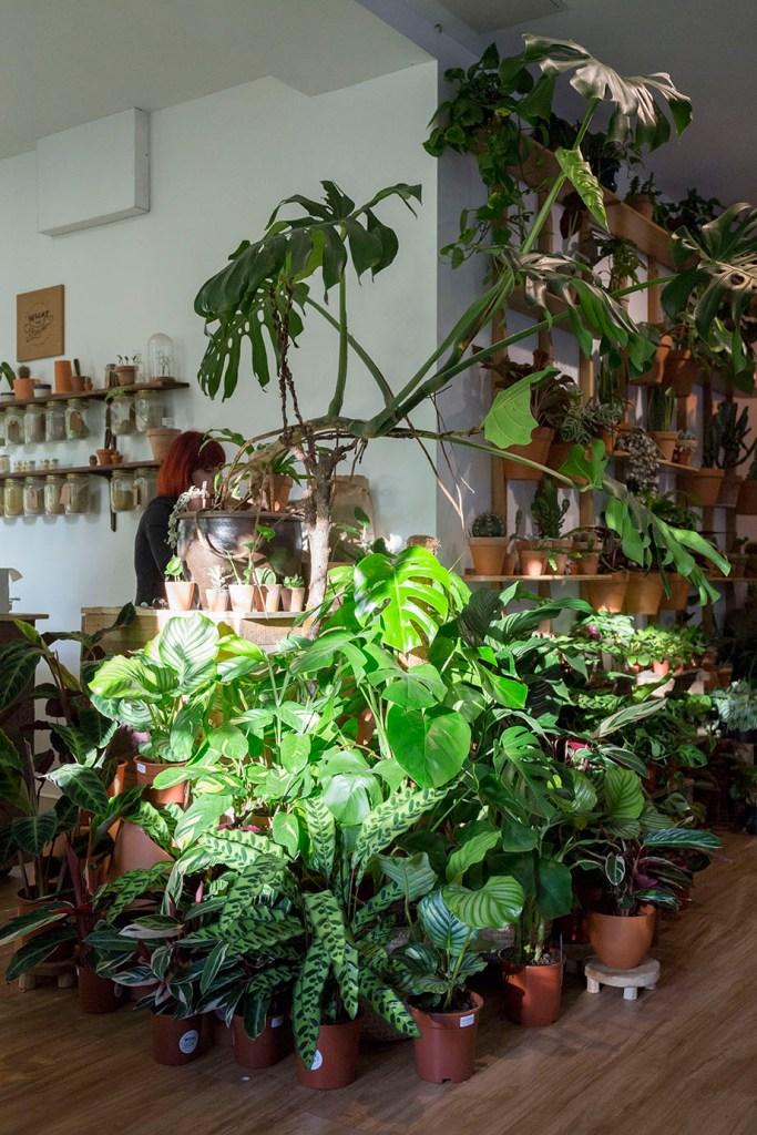 plante boutique paris