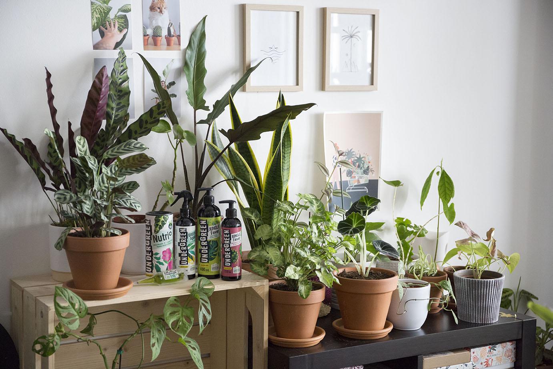 plante interieur engrais