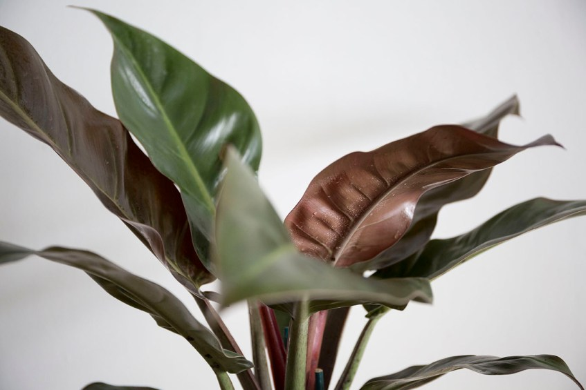 verte interieur plantes