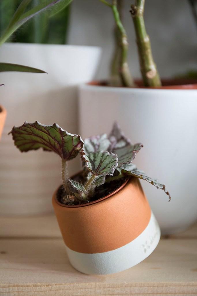 living things pot