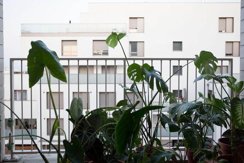 demenagement et plante