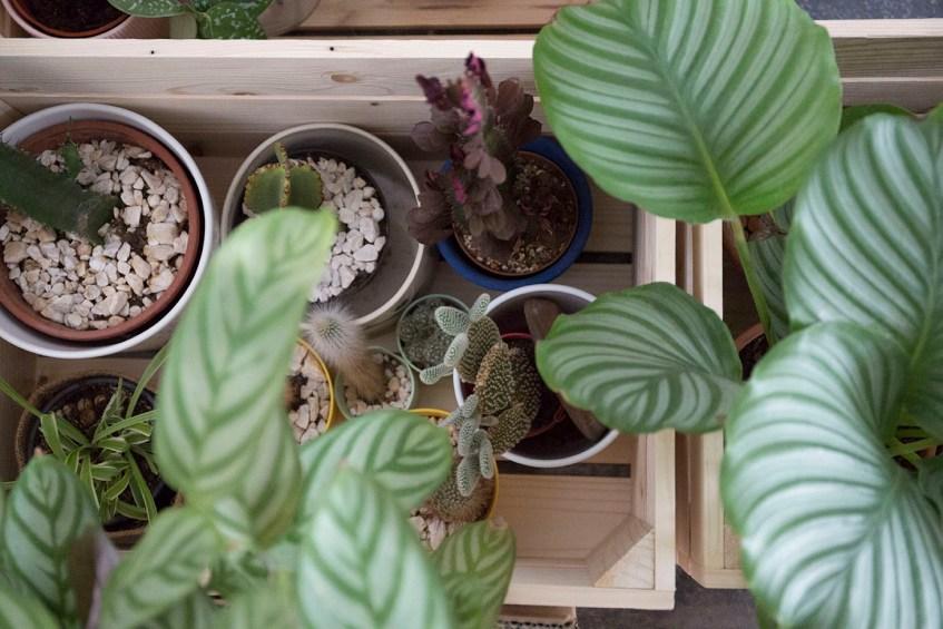 demenagement et plantes